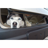 Walky Lock Car Lock - Car Containment Device for Dogs